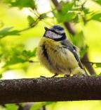 Mini Messel's Makers - Spring Birds